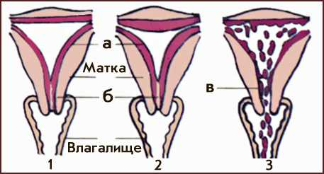 menstrualniy-tsikl-i-masturbatsiya